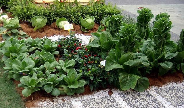 Pemilihan Tema Kitchen Garden Juga Selalunya Bertujuan Untuk Disesuaikan Dengan Halaman Yang Sedia Ada Berdekatan Ruang Dapur Rumah Berkenaan