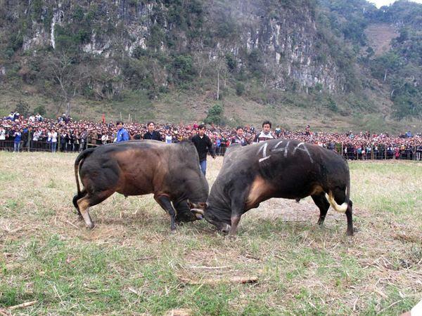 Vietnamese New Year 35
