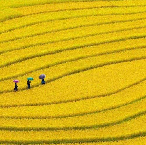 Trải nghiệm 3 cung đường ngắm mùa lúa vàng ở miền núi phía Bắc-1