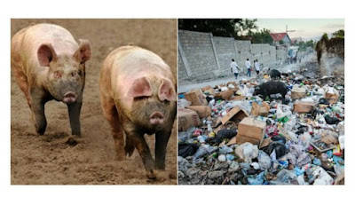 Abandoned twin babies eaten up by pigs in Nasarawa