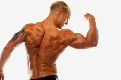 Building Muscle Mass