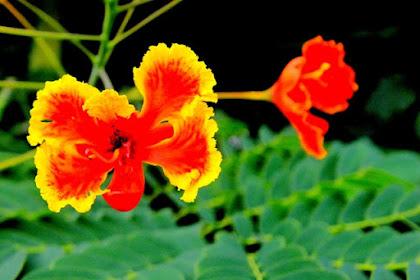 Perpaduan Warna Merah, Kuning, dan Hijau Bisa Membuat Foto Enak Dilihat
