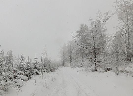 Droga grzbietowa po której prowadzi niebieski szlak.