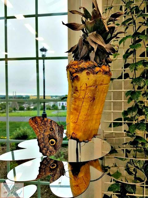 butterfly atrium, butterflies