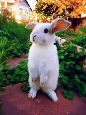 Imagen tierna de conejito blanco en dos patitas