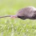 Rionegrino de 40 años es primera víctima fatal del año por hantavirus