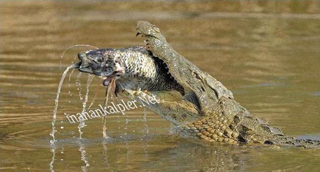 Vahşi Doğadan Avlanma Anları 4
