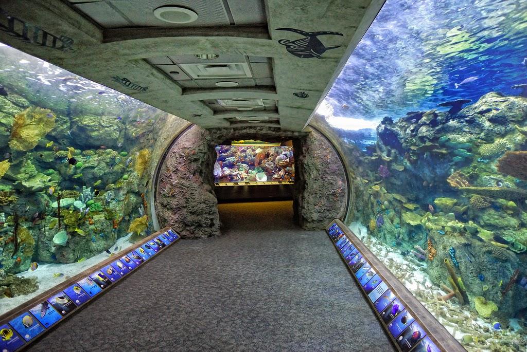 Long beach aquarium coupons 2018