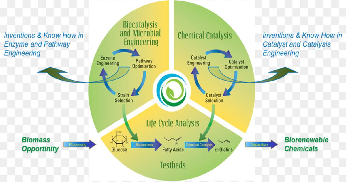 Sử dụng chế phẩm Biocatalyse