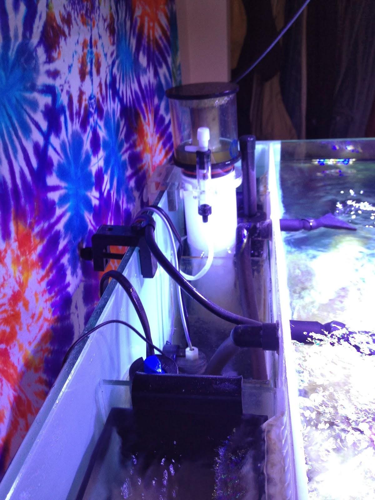 Marine Depot Blog: New Tank Build: 38 Gallon Nuvo Aquarium