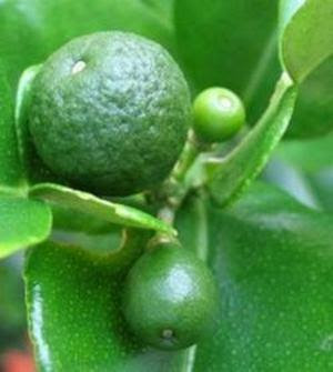benefit of lime