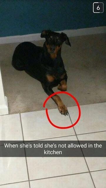 Best Dog Memes Viral Online 4