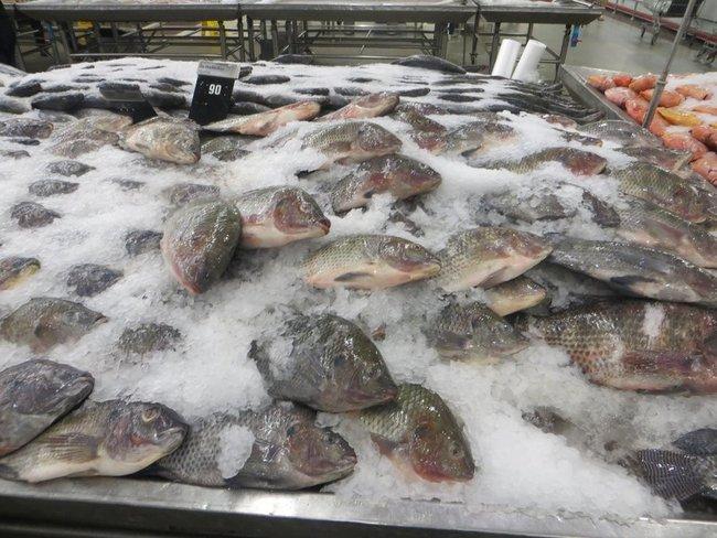 Самая продаваемая рыба в таиланде