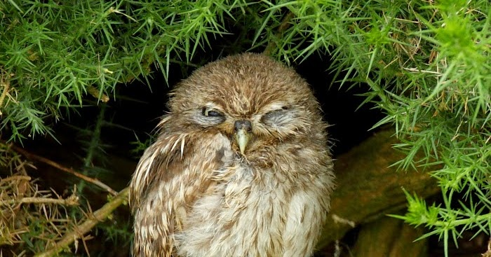 owls about that then!: It's been a while......