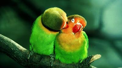 Latest Colorful Parrot HD desktop wallpapers