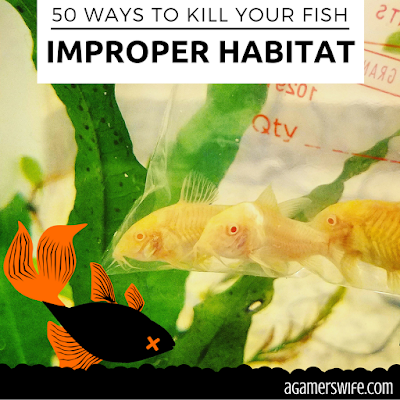 Replicate the Natural Living Conditions of Aquarium Fish