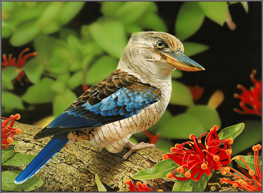 Animals Zoo Park: 12 Beautiful Birds Desktop Wallpapers Free
