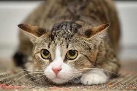 Jika Kucing Lucu Stres, Apa Yang Terjadi?