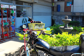 Small dog in motorcycle basket in Puriscal.