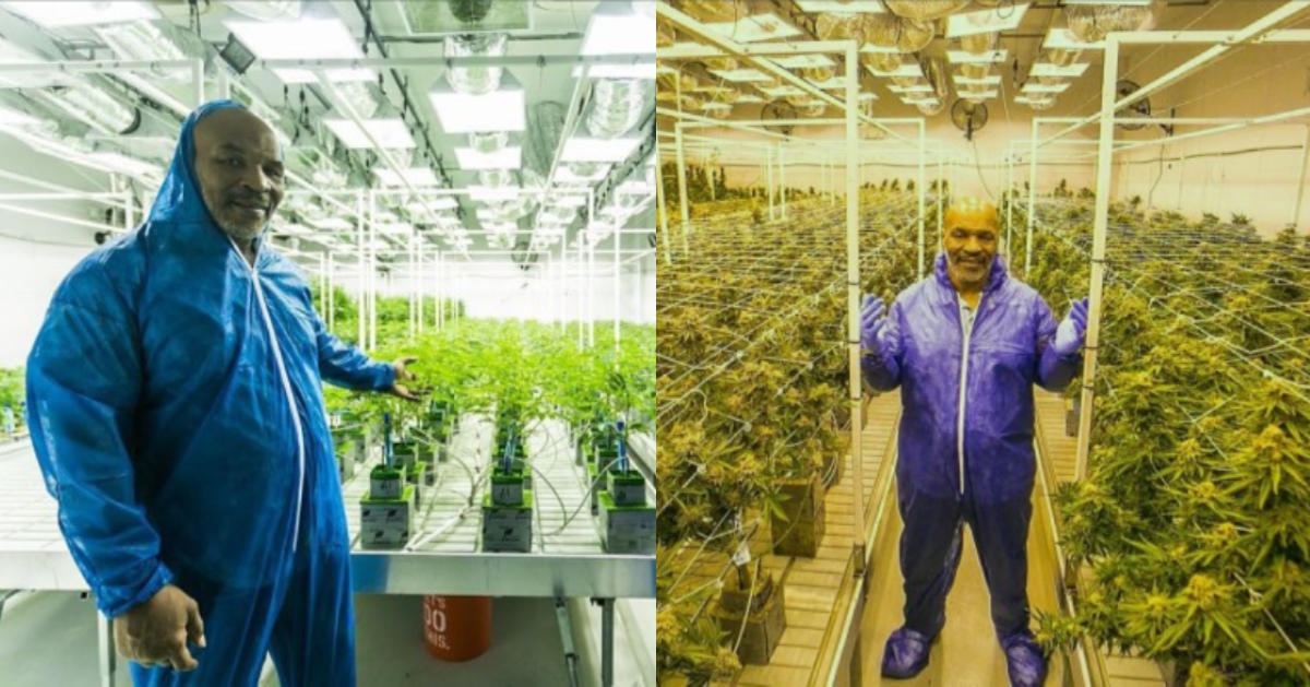 Mike Tyson Is Opening A Fancy 300-Acre Cannabis Resort