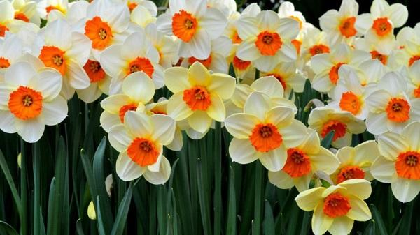 hoa thuy tien dep nhat