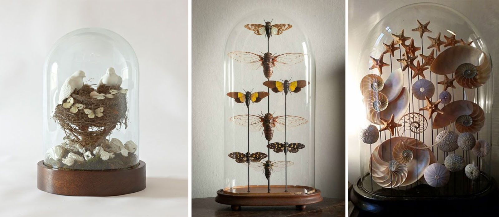 DIY butterfly domes