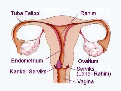 Sistem Reproduksi Pada Manusia Pembahasan Lengkap