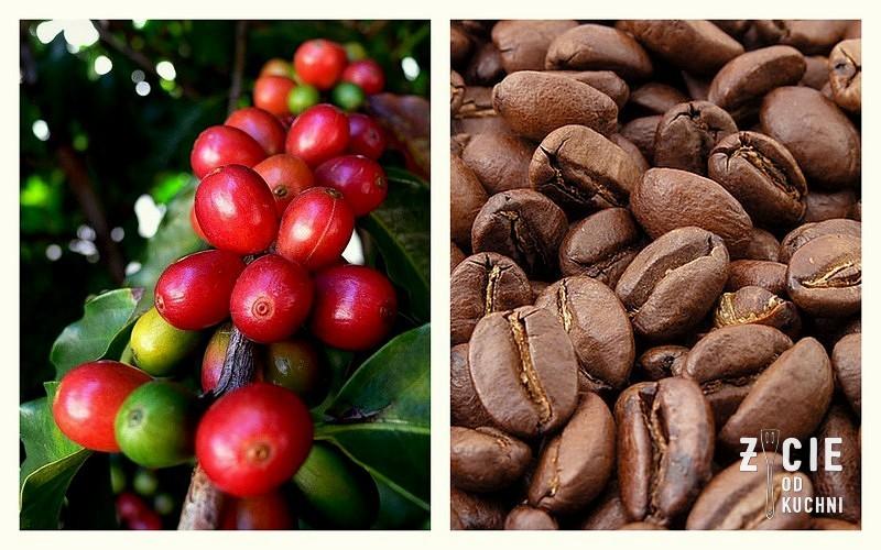 kawa, rebel, appka rebel, projekt rebel, aplikacja rebel, krakowski tydzien kawy, zycie od kuchni