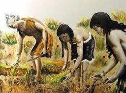 História da revolução agrícola