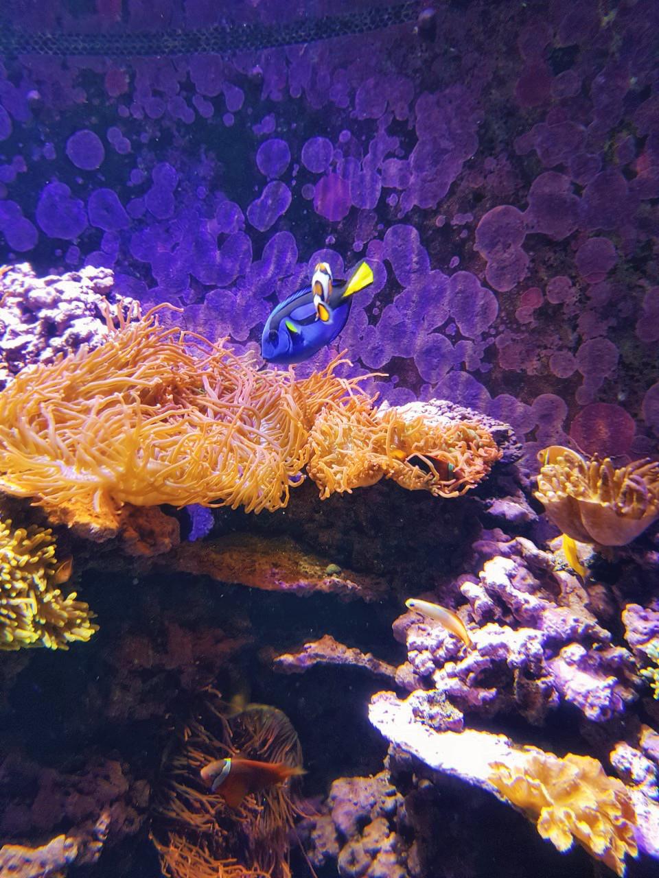 New Orleans, travel, blogger, aquarium, summer, US, tourist