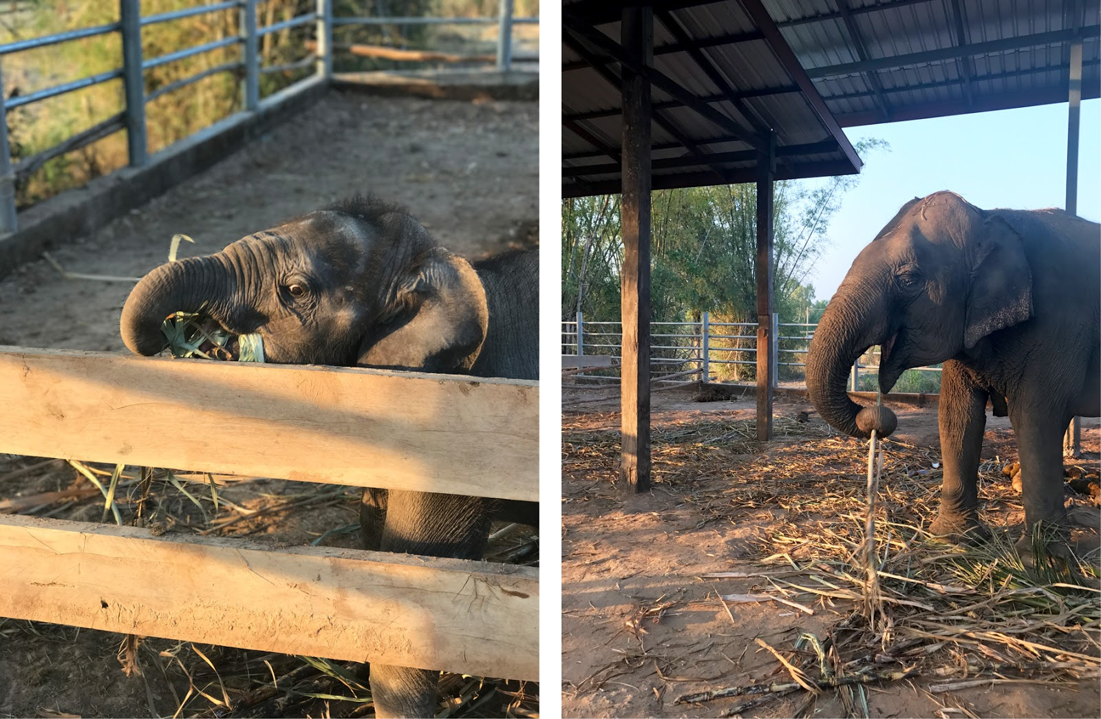Surin Homestay in Thailand Elephants