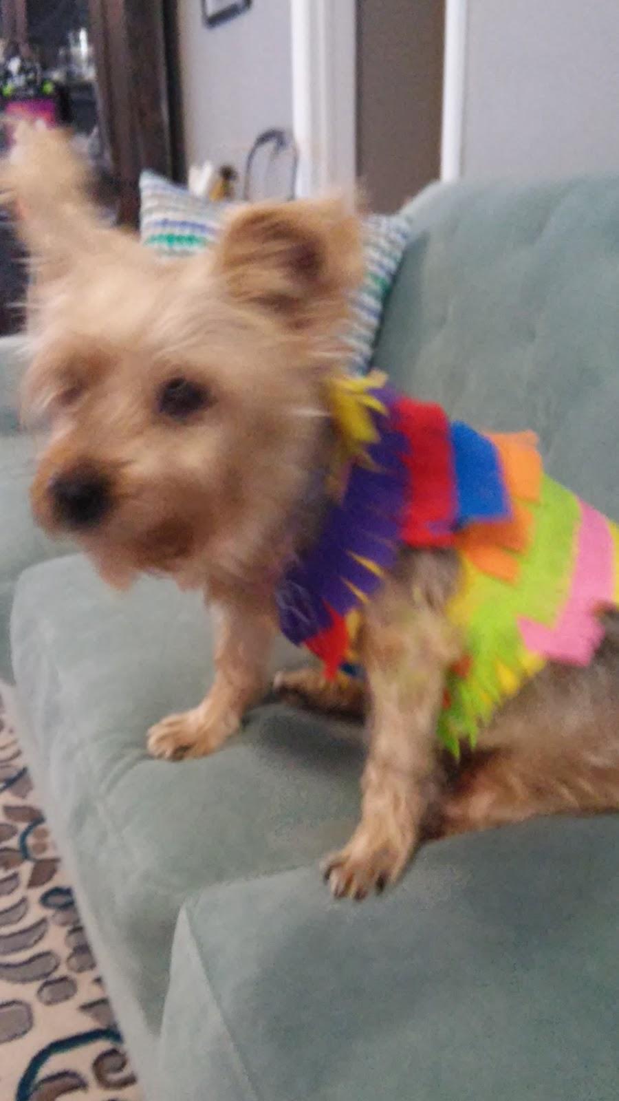 Look What Rachel Made!: Dog Pinata Costume