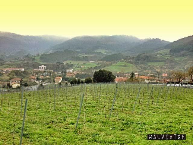 bakio viñedos