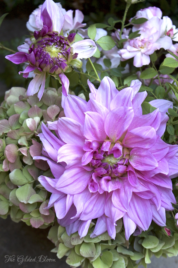Summer Garden Dahlias- www.gildedbloom.com