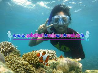 paket snorkeling bersama ikan nemo karimunjawa