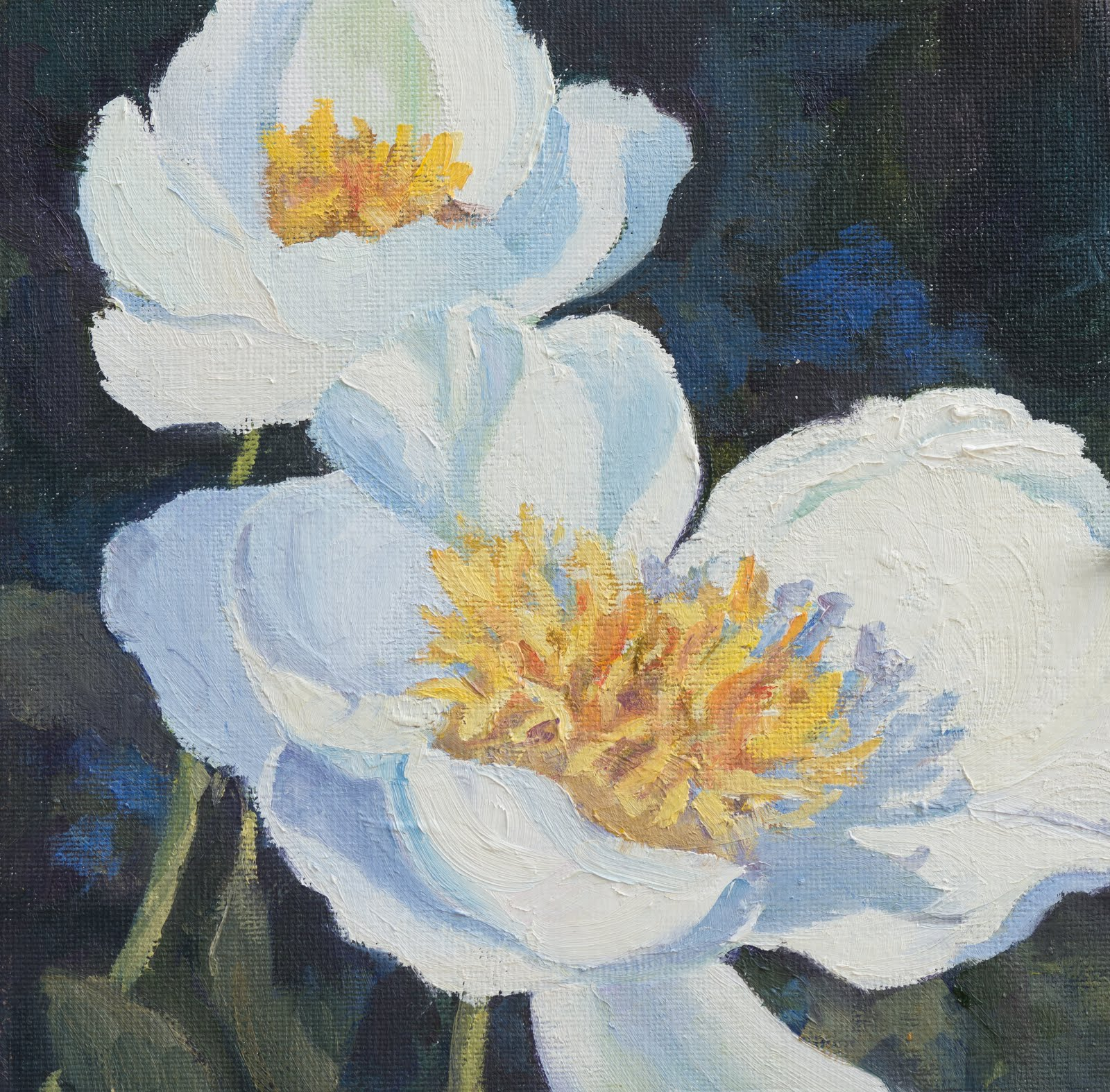 Common Peonies