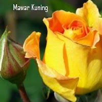 Mawar Yellow
