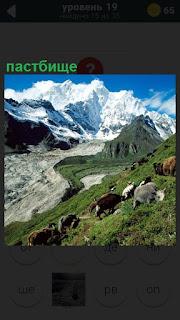 Далеко на фоне гор пастбище, на котором пасутся коровы