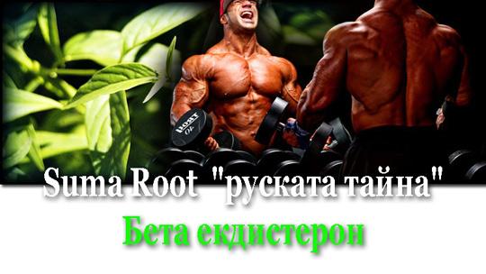 Как да избереме най-добрата хранителна добавка с екдистерон