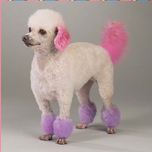 Food Color Dye Dogs Hair