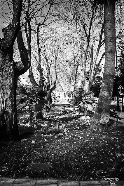 Invierno en el parque - Blanca Arias