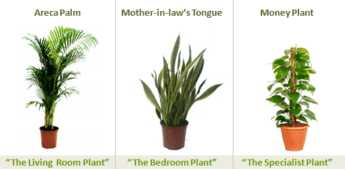 4 Steps Caring for Indoor Plants picture