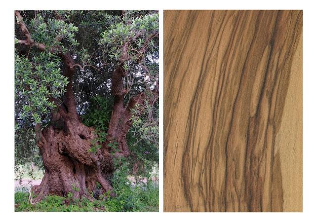 specie legnose
