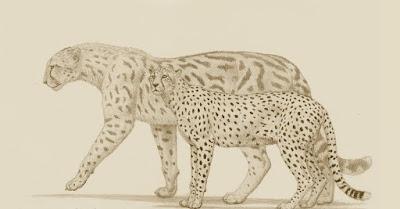 Comparación tamaño Guepardo gigante prehistórico con un guepardo actual