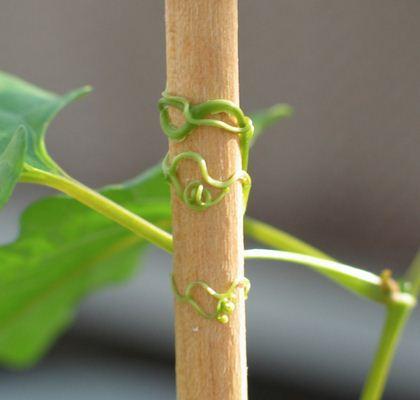 Macam-macam Gerak Pada Tumbuhan beserta Contohnya Terlengkap