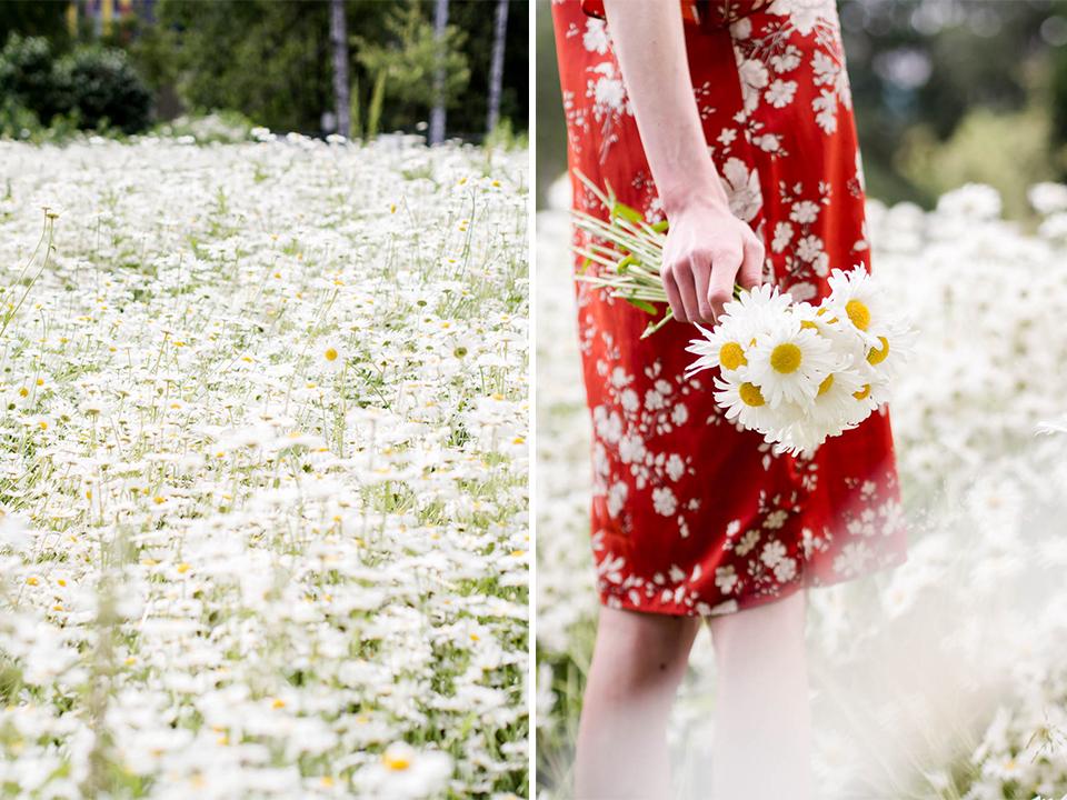 daisy-field-red-floral-summer-dress-päivänkakkara-niitty-kukka-mekko-kesä