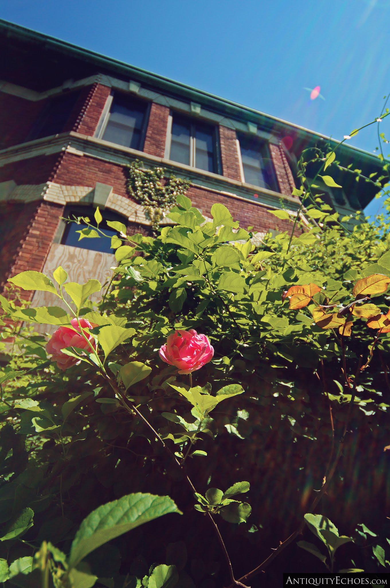 Overbrook Asylum - Hospital Rose Garden