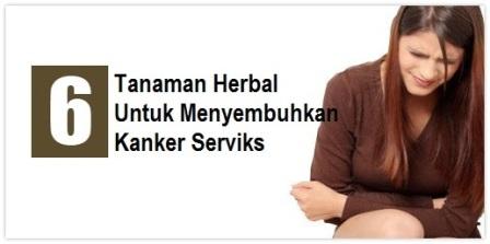 serviks di negara berkembang menyerupai Indonesia cukup bermacam-macam 6 Tanaman Herbal untuk Menyembuhkan Kanker Serviks