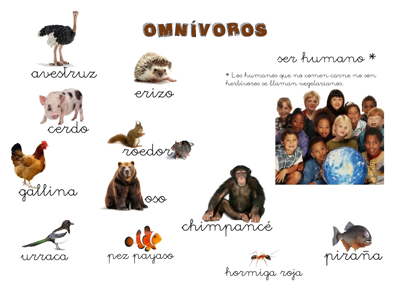 Qué Puedo Hacer Hoy Animales Omnívoros