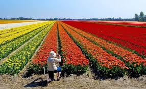 Senhora sentada em frente de um imenso jardim com varias flores coloridas